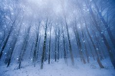 Snowstorm by Bartosz Dubiel