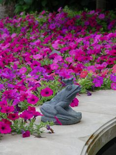 welcoming lead-frog prince surrounded by droves of petunias!! A real fairytale