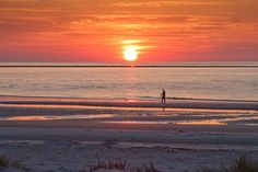 Top 10 dog-friendly beaches in the United States - includes Hunting Island State Park, SC!