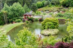 Loved this Japanese style garden at the Emu Valley Rhododendron Gardens in northern Tasmania