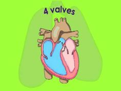 how to keep the circulatory system healthy for kids