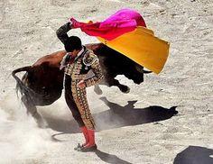 El matador con su capote. Él quiere ser muy artística cuando esta matando el toro.