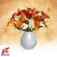 Mini Callas White and Orange Pack 80 stems - EbloomsDirect – Eblooms Farm Direct Inc. Calla Lily Flowers, Fall Flowers, Cut Flowers, Fresh Flowers, Flower Vases, Flower Arrangements, Calla Lilies, Bulk Flowers Online, Classic Romantic Wedding
