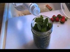 Quick Kitchen Tid Bit: Mint Extract Inspired by Stayingawake20 and Theeastwatch
