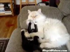 video lucu binatang: kitten bugn sleeping