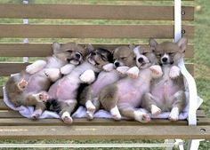 I'll take them all please! #Corgi #Corgis #DogMom #DogDad #Dogs #Dog #DogLover