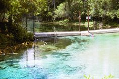 Chiefland (north of Dunnellon, Levy county): Manatee Springs State Park