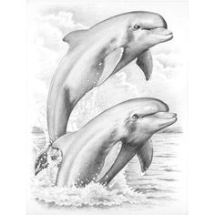 "Dolphins Sketching By Number Kit 8""X11-3/4"" PPSKM-"