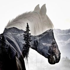 Cindy Pierce Art / Photography ~ Alpine ~ Limited Edition Print ~ - Pferde - ( I like this design because the contrast between the Horse and the landscape. Pretty Horses, Horse Love, Beautiful Horses, Horse Photos, Horse Pictures, Horse Drawings, Animal Drawings, Equine Photography, Animal Photography