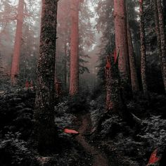 ImageFind images and videos about kpop, aesthetic and nature on We Heart It - the app to get lost in what you love. Horizon Zero Dawn, Digimon, Twilight, Half Elf, Spirit Fanfic, Far Cry 5, Ex Machina, Jacob Black, Gravity Falls