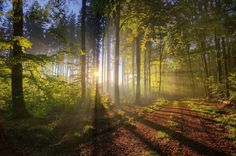wallpaper-forest-light