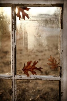 Rustic White Windowframe with Autumn Leaves
