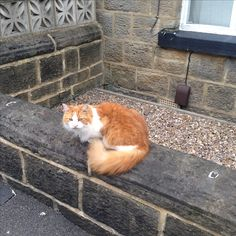 Kitty cat on a wall in Horsforth, West Yorkshire.