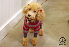 Doggie Do!! / good dog and hello cat !!の画像