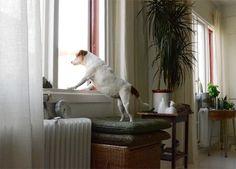 Camilla Engman's dog Morran and a great interior shot