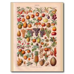 ==> reviews          Vintage historic  fruit postcards           Vintage historic  fruit postcards we are given they also recommend where is the best to buyDeals          Vintage historic  fruit postcards Online Secure Check out Quick and Easy...Cleck Hot Deals >>> http://www.zazzle.com/vintage_historic_fruit_postcards-239161677764012588?rf=238627982471231924&zbar=1&tc=terrest