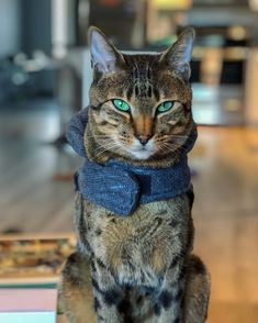 Green eyed Savannah Cat