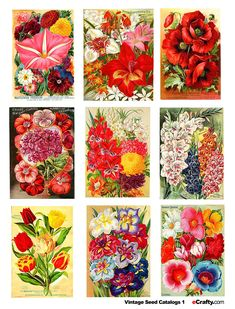 Printable vintage seed packets. Would make a beautiful framed and matted wall grouping.