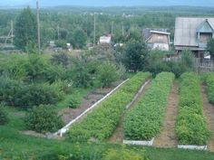 Un agricultor foarte talentat... Mi-a placut metoda sa - Pentru Ea Backyard Vegetable Gardens, Vegetable Garden Design, Pergola Patio, Growing Vegetables, Koi, Railroad Tracks, Terrace, Country Roads, World