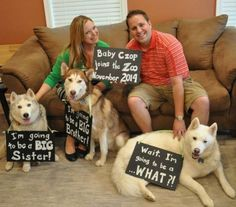 24 Dogs Stealing The Spotlight In Their Human's Pregnancy Announcement