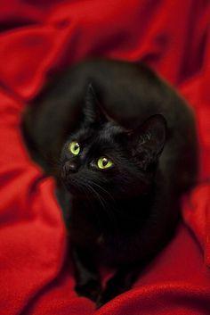 Black Cat. #felines #cats #kittens #gorgeous #black #pets #animals