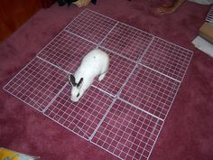 instructions on building rabbit home (with many more photos in the comment section)