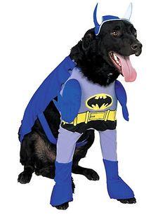 Carnaval para os Pets   Fantasias para cachorros e gatos