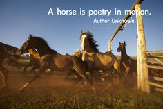 Horse Quotes & Cowgirl Quotes | Colorado Dude Ranch Vacations