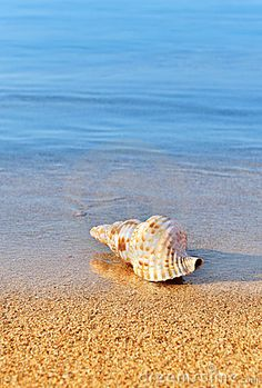 Picture of a seashell on a serene beach.   Water swirling at your feet, walking along the waters edge!