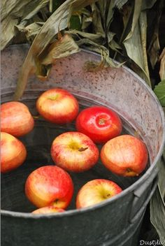 Bobbing for apples ..for me a halloween tradition!