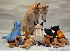 The Cult of the Greyhound
