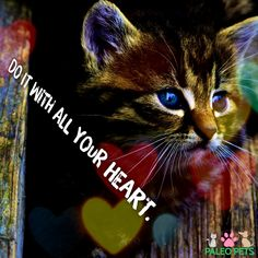 Do it with all your #heart #cat #pets #PaleoPets  Make sure to LIKE and Share this cool cat. 😺