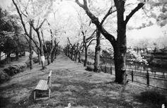 その他カメラ - 櫻 -  トイカメラ  クラシックカメラ  桜  モノクロ  efke  127  トイラボ  リサイズ  - Camera Talk -