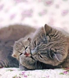 cat mom with little baby ♥