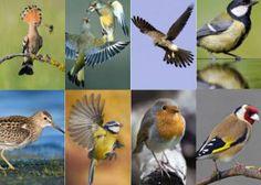 Guía para ornitólogos primerizos: ocho aves que se pueden ver fácilmente en España