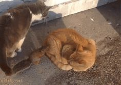 7 Best Cat Gifs of the Week – 28th March 2015 - We Love Cats and Kittens