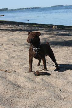 My Patterdale Terrier - Gus