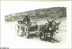 Donkey cart, Stuart Range ca. 1930