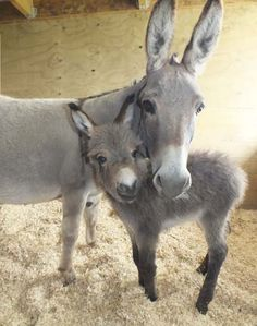 love love love them !!!! Mommy and baby Eeyore or as the kids call him Eeyort!