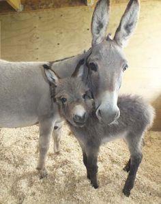 So sieht Liebe in der Tierwelt aus. #APASSIONATA