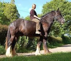 woman riding shire horse - Google zoeken
