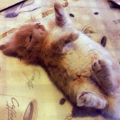 This guy who likes to dance a bit while nappin'. | 23 Bunnies Snoozin'