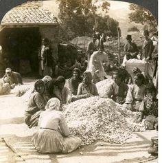 Antakya-Samandağ, İpek böceği kozaları ve kadın işçiler