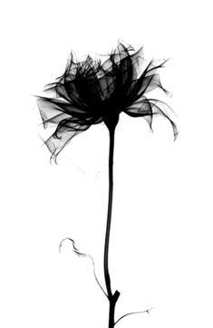 FLOWER X-RAY Art Print