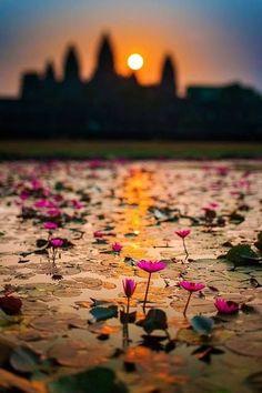 Lotus Flower Pond in Angkor Wat, Cambodia