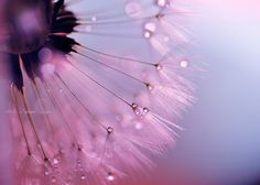 December Love by Lafugue Logos   on 500px