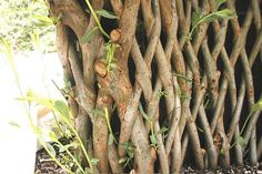 living fence of braided willow