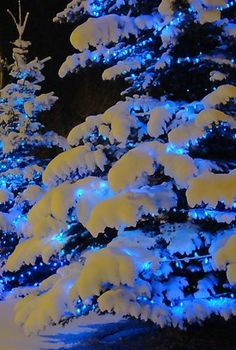 Lit outdoor trees with snow.