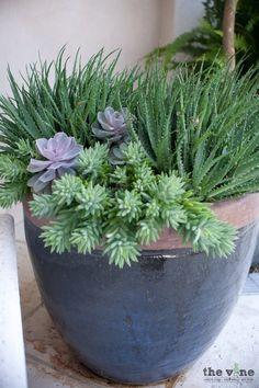 Succulent Gardening, Succulent Pots, Cacti And Succulents, Planting Succulents, Container Water Gardens, Container Plants, Container Gardening, Outdoor Flower Planters, Outdoor Flowers