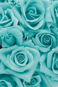 Aqua/Blue Roses iPhone Wallpaper